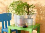 Как организовать полив домашних цветов при отъезде в отпуск – Как сохранить комнатные растения во время отпуска: практичные способы «удаленного» полива