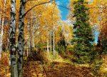 Какие деревья желтеют первыми – Деревья и кустарники осенью. Осенние изменения. Почему листья желтеют и опадают.