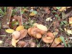Осенние грибы какие бывают – описание разных видов грибов и особенности их размещения в лесном массиве, что нужно знать начинающему грибнику