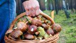 Как стать грибником – описание, фото, как готовить грибы